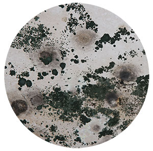 black mold symptoms