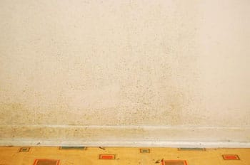 Black Mold In Walls how to remove black mold from drywall – cleanup & tips