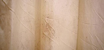 Surface Mold In Bathroom how to remove black mold in shower curtains