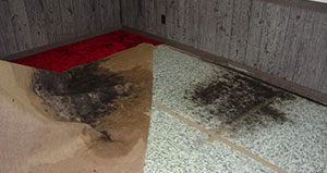 mold under carpet