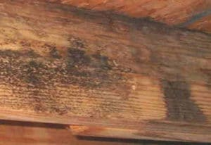 black mold on wood basement beams