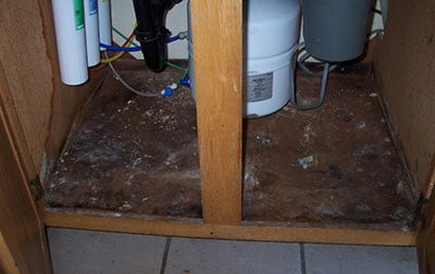 black mold under kitchen sink