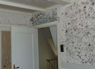 Black Mold In Walls removing black mold inside, behind and on walls - a full guide
