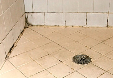 How To Remove Black Mold On Bathroom And Shower Tile