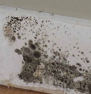 Black Mold Symptoms Despite The