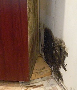 black mold bathroom sink how to get rid of black mold kitchen sink or in cabinets 17407