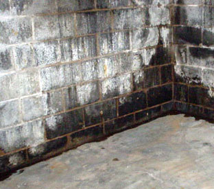 How To Get Rid Of Black Mold In Basement Walls Floors