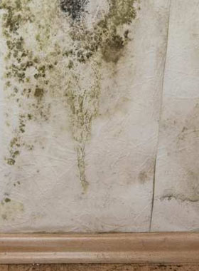 how to clean mould of painted walls