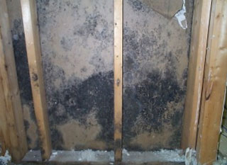 Black Mold Behind Wood Walls