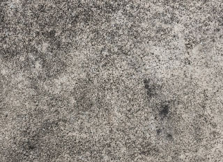 black mold on concrete