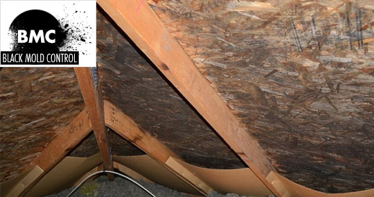 Black Mold In Attic Prevention And Removal Of Attic Mold