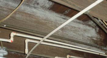 black mold in crawl space