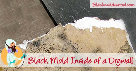 How to Remove Black Mold from Drywall – Cleanup & Tips