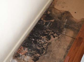 black mold on floors