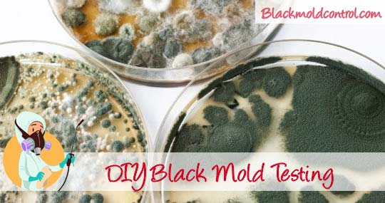 Diy Black Mold Test