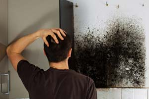 How to get rid of Black Mold under Kitchen Sink or in Cabinets