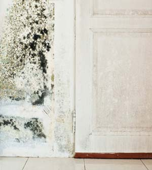 Black mold in the walls