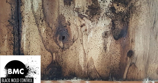 What Kills Mold on Wood
