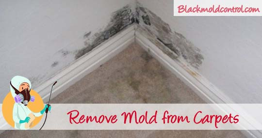 How To Remove Black Mold From and Under Carpets