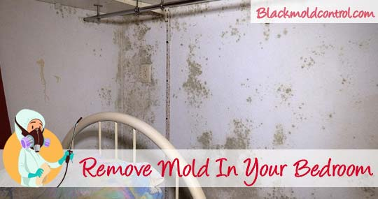 remove mold in bedroom