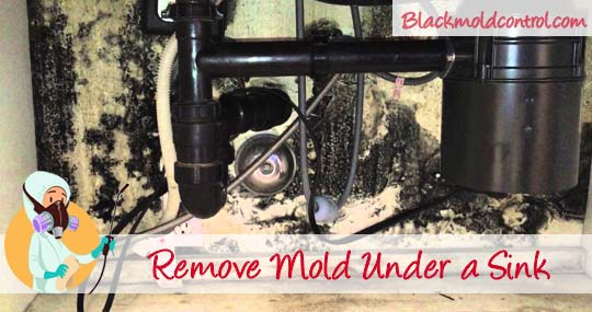 How To Remove Black Mold Under Or In A Sink