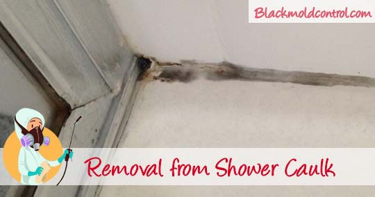 mold in shower removal